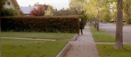 2616_halloween_1019 montrose avenue (hedge)_1.png
