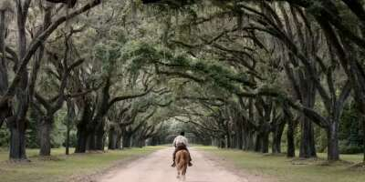 3997_emperor_wormsloe plantation - oak lane_0.png