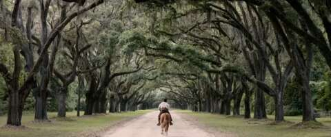 Media 3997_emperor_wormsloe plantation - oak lane_0.png