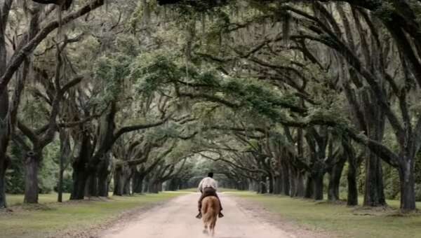 3997_emperor_wormsloe%20plantation%20-%20oak%20lane_0.png
